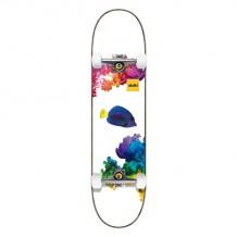 Skate Aloiki 7.8 Coral MC